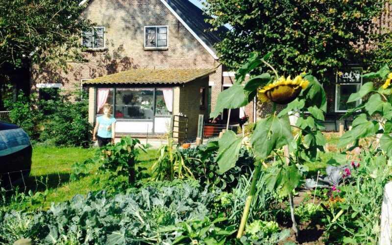 Afbeelding van een boerderij met moestuin waar een jong meisje in loopt